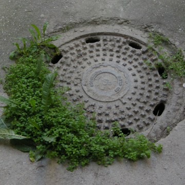 locse-levoca-guerilla-gardening-01